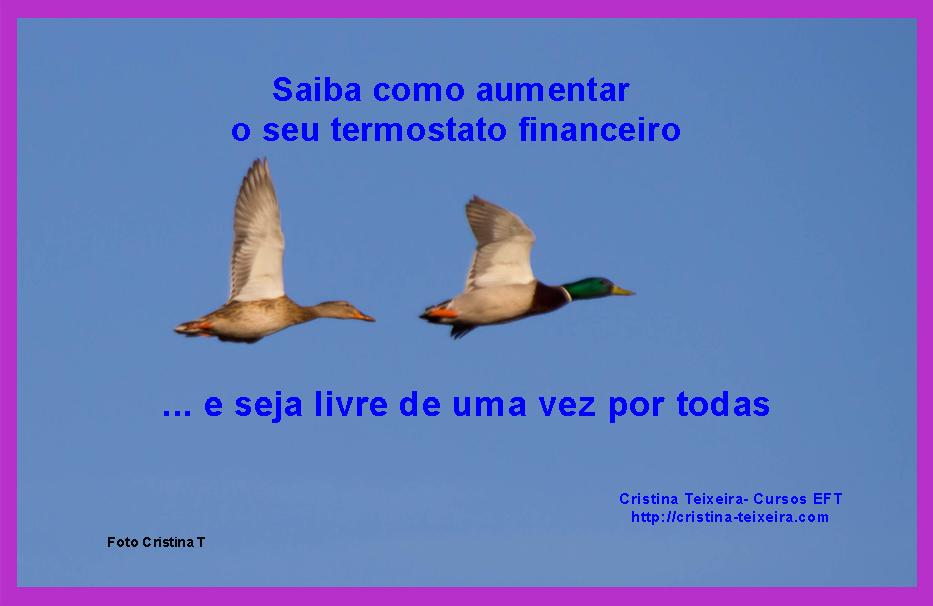 termostato financeiro e eft